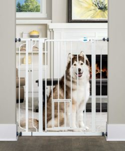 Crating dog while at work using pet-gate