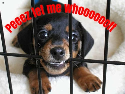 puppy resistance to crate training