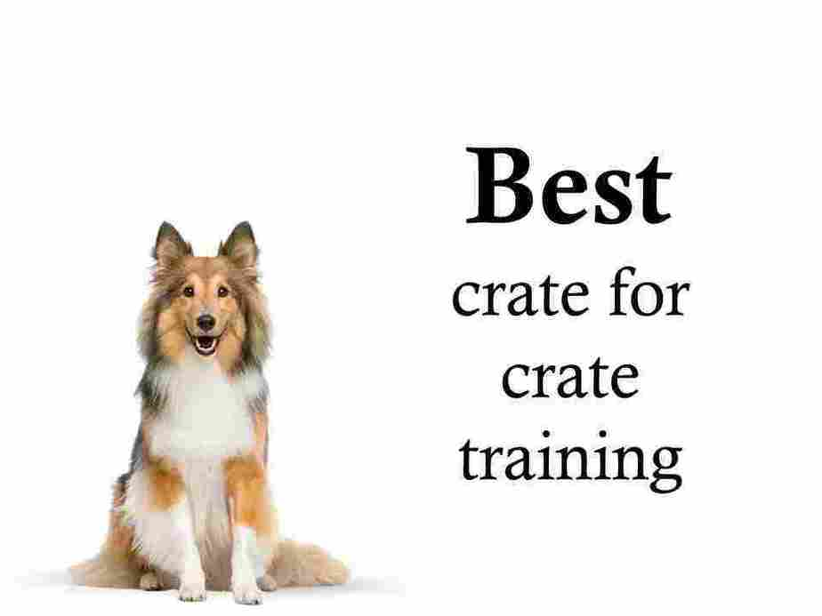 Recommended crate training products: My fully tested picks 1