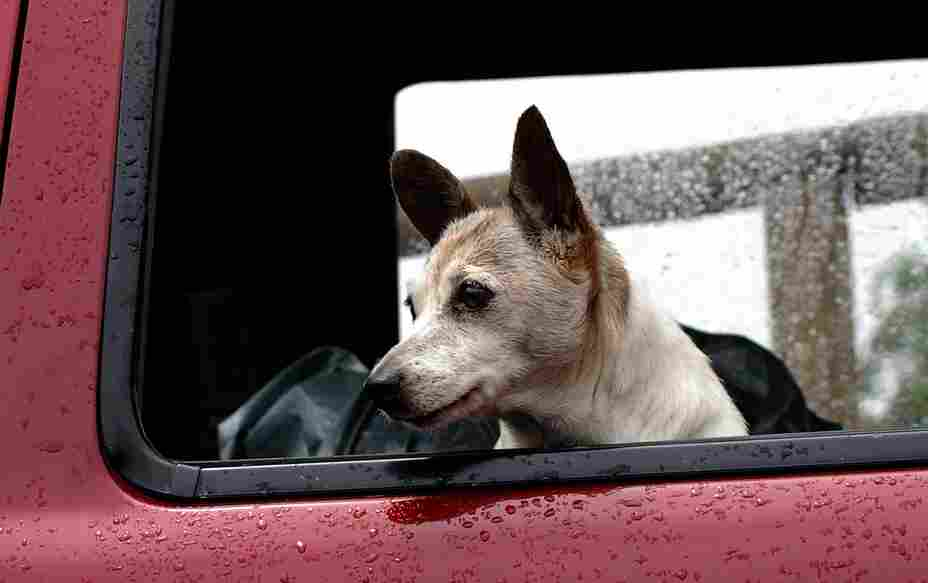 Best dog crate for car travel: safe and fully tested