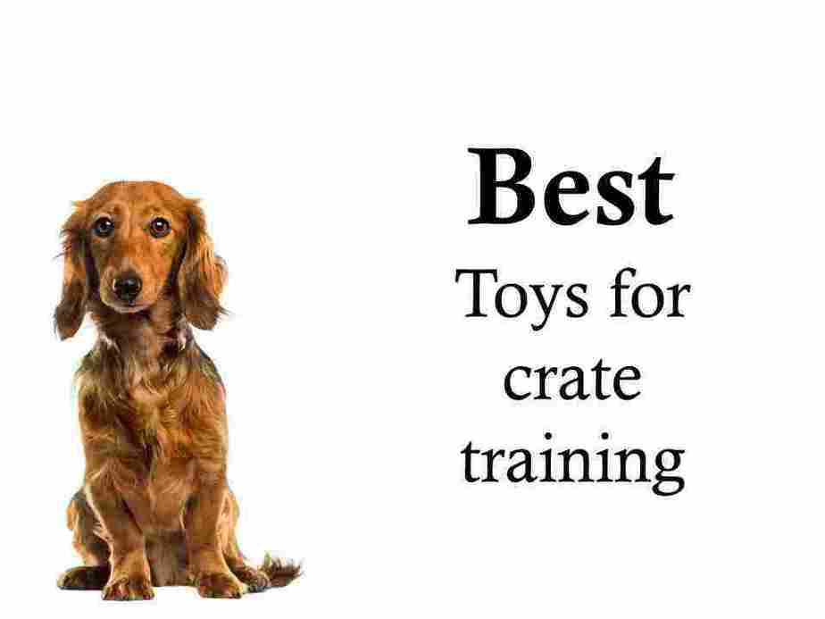Recommended crate training products: My fully tested picks 3