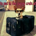 What to put in the puppy crate at night