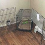 playpen vs crate