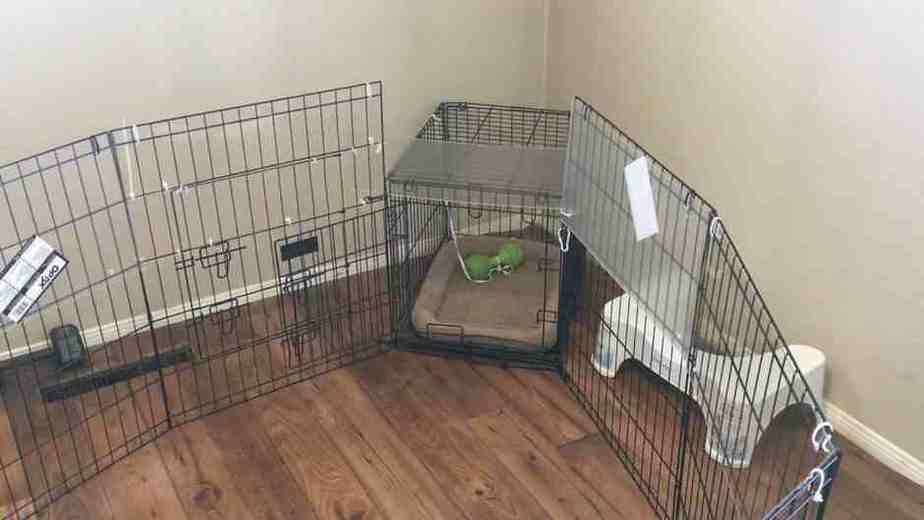Playpen helps the dog get used to his crate