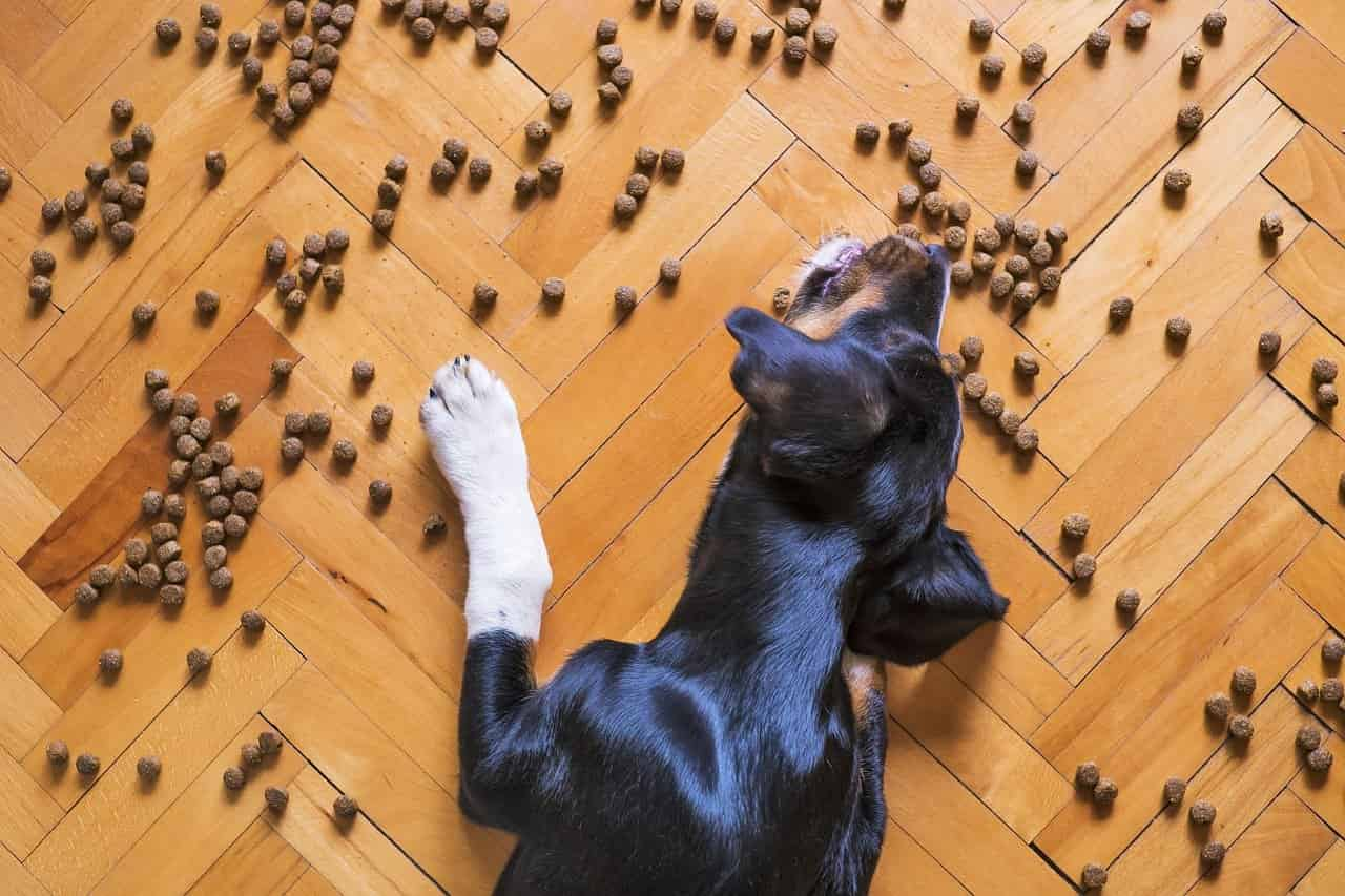 Crate training without treats 2 powerful tools to do it