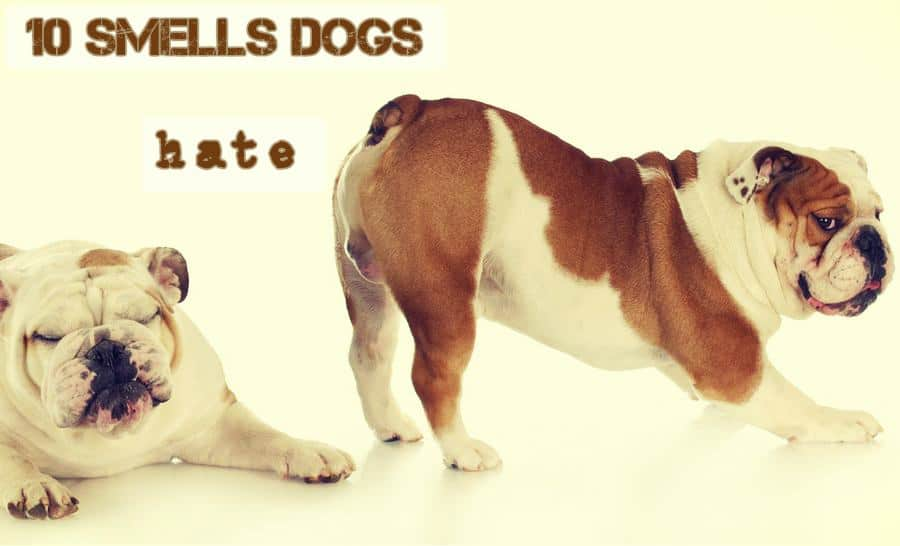 10 smells dogs hate that are perfect for training