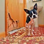 Crate training a dog with separation anxiety