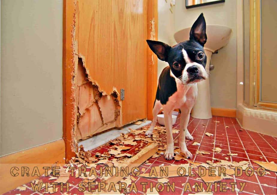 crate training an older dog with separation anxiety guide
