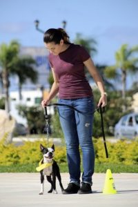 crate training a boston terrier