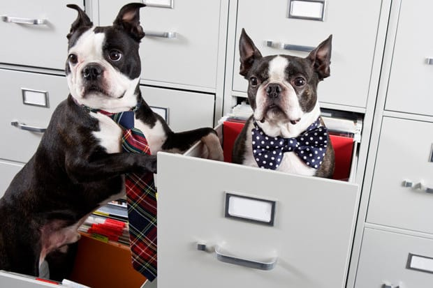 Crate training a Boston terrier while working a fulltime job