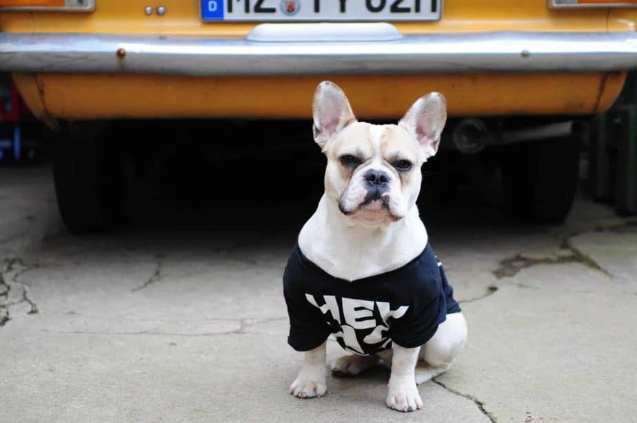 Best car travel crate for french bulldog