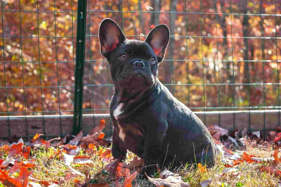Best crate for french bulldog perfect size 4 easy training
