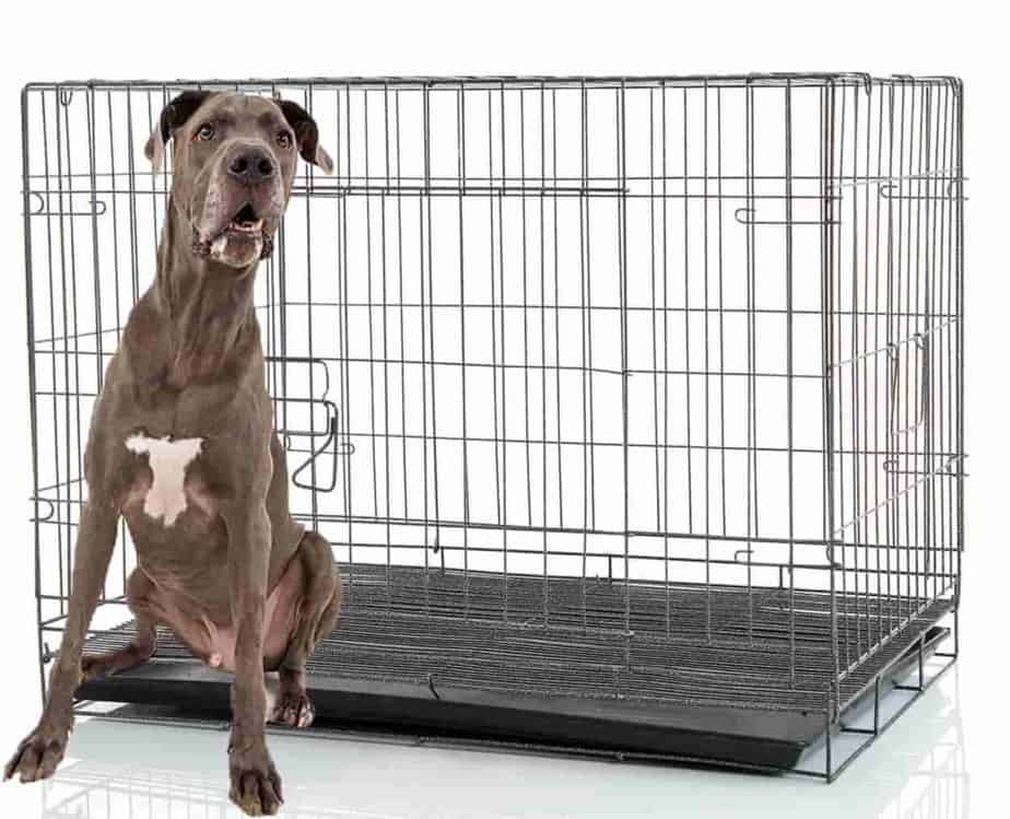 crate training a great dane puppy