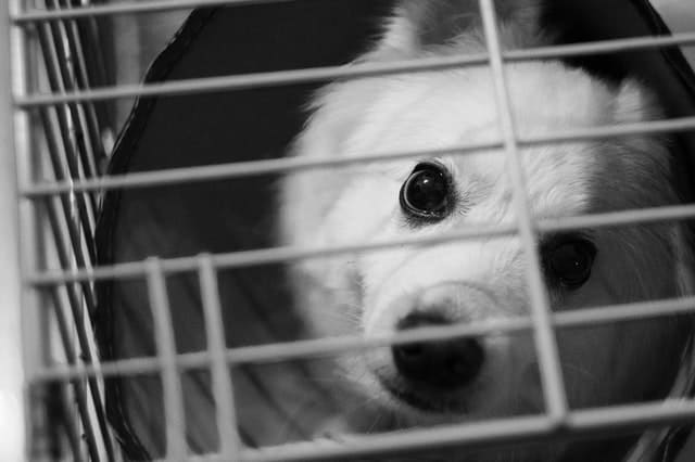 dog suddenly hates his crate at night