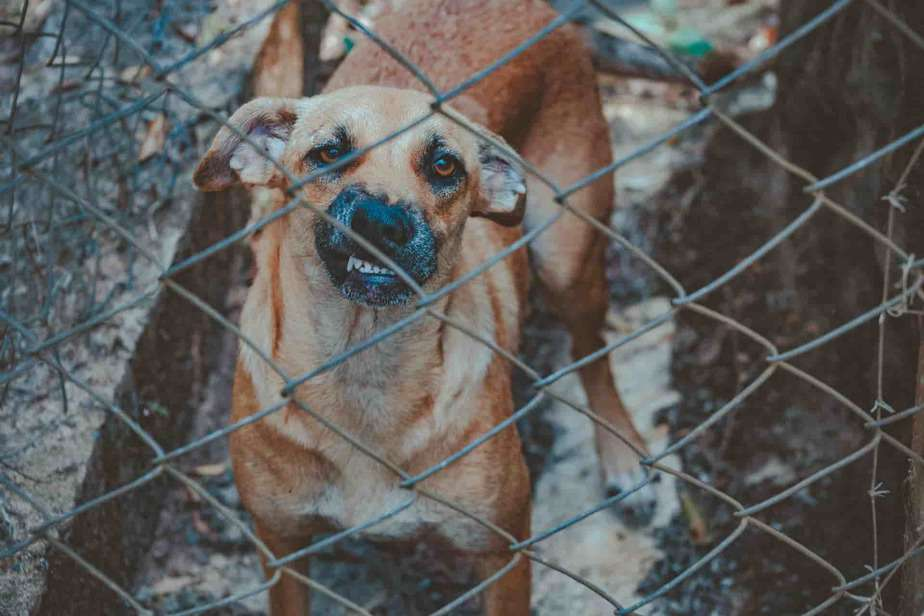 Dog whining in crate all of a sudden? 10 Shocking reasons
