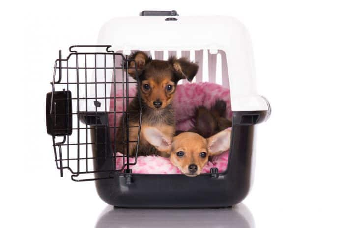 Two dogs in one crate? cheap solution or a time bomb! 1