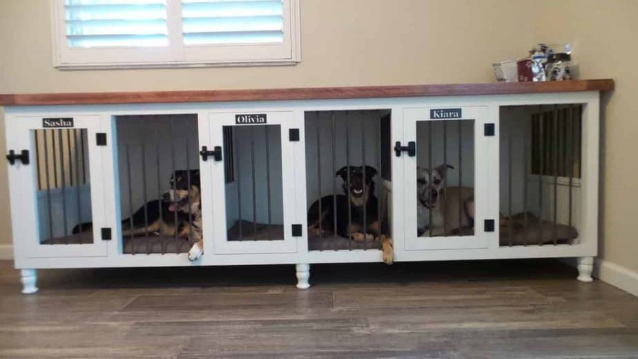 Crate training multiple puppies at once