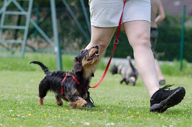 Is it hard to crate train a dachshund puppyIs it hard to crate train a dachshund puppy