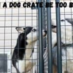 can a dog crate be too big