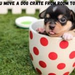can you move a dog crate from room to room