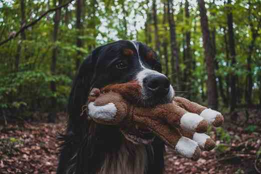best toys for crate training a bernese mountain dog