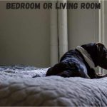 Dog crate in bedroom or living room