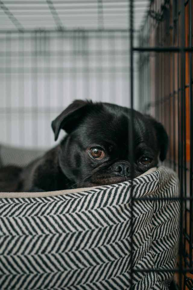 Dog stays in crate