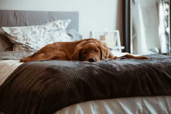 How long should a puppy sleep in your room