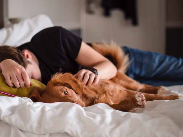 sleeping quality with dogs